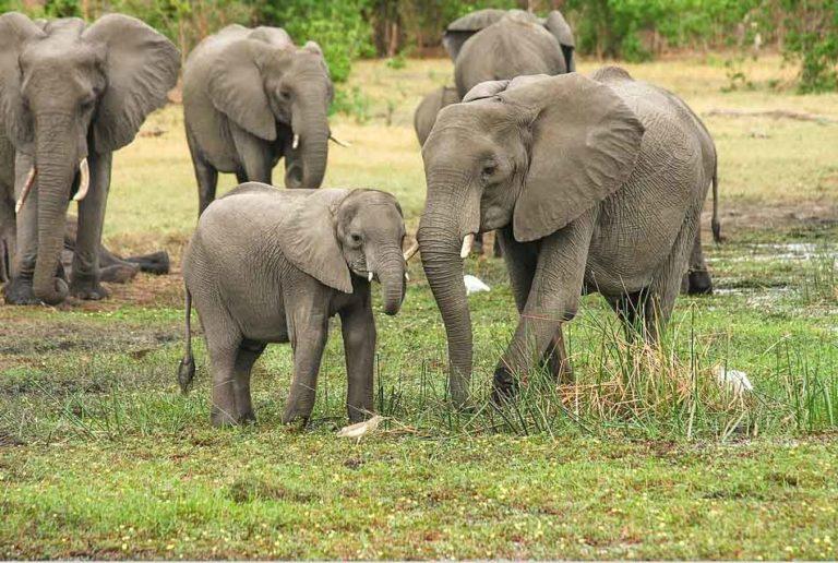 Elefanten Suedafrika Johannesburg