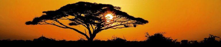 Abendstimmung mit Baum in Suedafrika