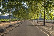 mietwagen los angeles: Strasse durch Wein Anbau Gebiet