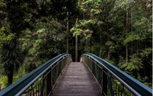 Brücke mit Baumfarnen, Mietwagen Rotorua