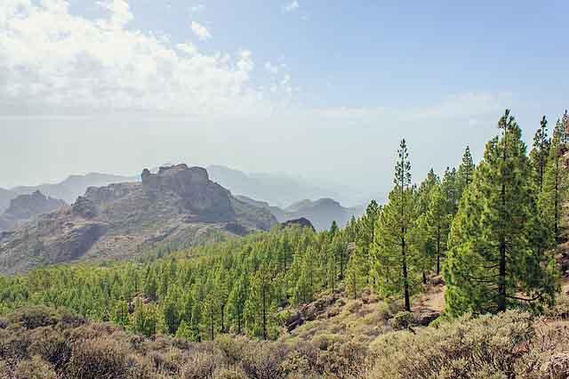 Berglandschaft mit Wald auf Gran Canaria