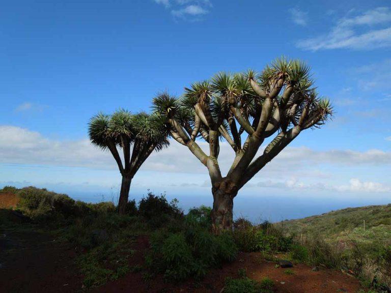 Palmen auf Huegel unter blauem Himmel