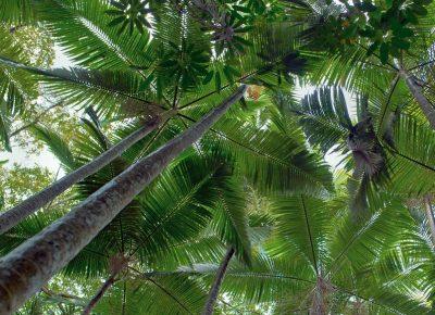 Mietwagen Cairns Palmen